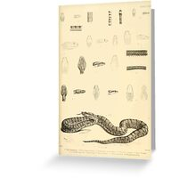 The Reptiles of British India by Albert C L G Gunther 1864 0527 Snakes Greeting Card