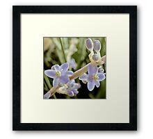 Mystery Flowers. Framed Print
