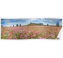 Field of Cosmos Poster