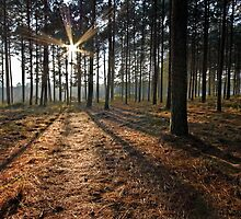 Sunrise in the Woods by Rob  Southey