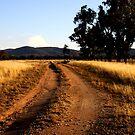 Barambogie Track by Natalie Ord