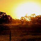 Sunset From The Stock Route by Natalie Ord