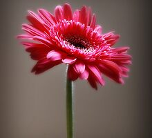 Flower by G. David Chafin