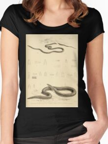 The Reptiles of British India by Albert C L G Gunther 1864 0515 Snakes Women's Fitted Scoop T-Shirt