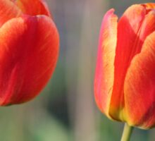 Red and Yellow Tulips Sticker