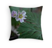 Spring-Beauty, Claytonia caroliniana Throw Pillow