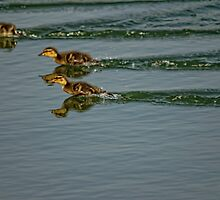 Turbocharged Ducklings by chrismcloughlin