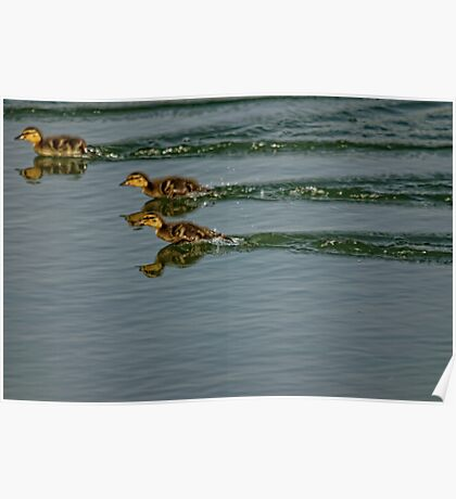 Turbocharged Ducklings Poster