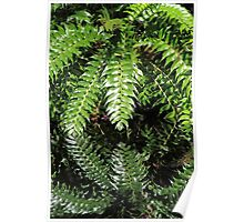 Reflected greenery Poster