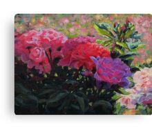 Rosy Glow Canvas Print