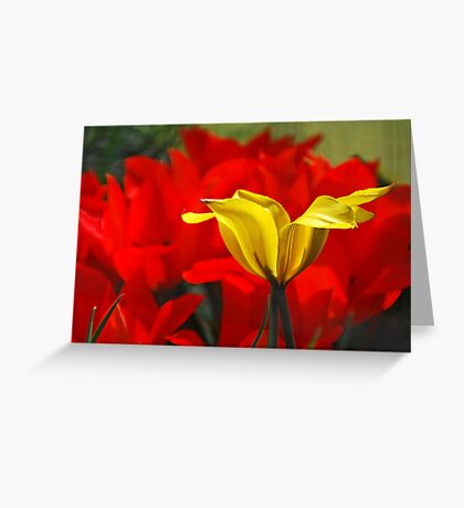 spring capers Greeting Card