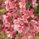 A Spring Celebration by lorilee
