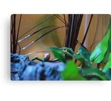 Find The Reptile Canvas Print