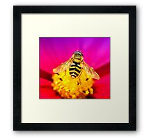 Fly me to the Moon ~ Hover fly Framed Print