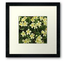 Springtime in Cornwall Framed Print