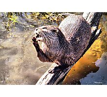 Aaaah! So Otterly Boring!! Photographic Print