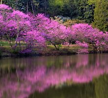 Pretty In Pink by John Absher