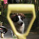 I got you framed... by supernan