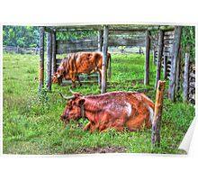 Pasture Scene Poster