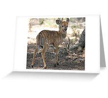 Baby Nyala Greeting Card