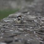 Bird on a wall by Alan McNeice