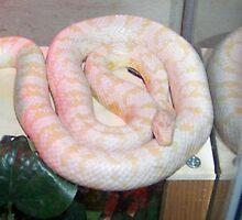 Tenny (Zen Snake) by 8upchef