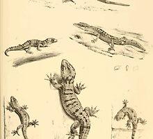 The Reptiles of British India by Albert C L G Gunther 1864 0503 Gecko Sinhonis, Subpalmatus etc by wetdryvac