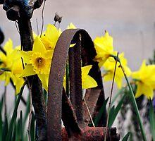 Daffodills & Wheel by Stan Owen