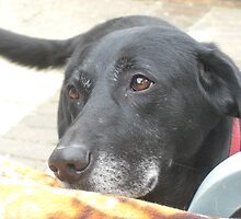 Puppy dog eyes by kezbomb