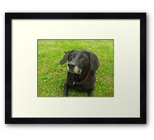 Looking up to Master Framed Print