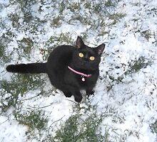 Snow cat by kezbomb