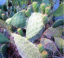 cactus flowers by MaviSchirripa