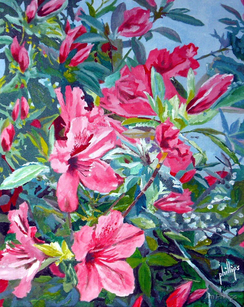 Azaleas by Jim Phillips