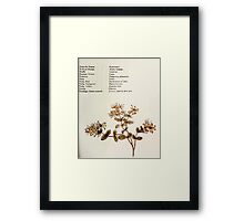 Language of Flowers Kate Greenaway 1884 0045 Descriptions of Specific Flower Significations Framed Print