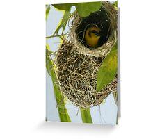 weaver bird blues Greeting Card
