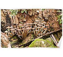 Fungi high rise Poster