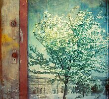 The Door and the Tree by Tara  Turner