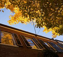 Washington, DC Facades - Reflecting on Autumn in Georgetown  by Georgia Mizuleva