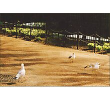 A Flock of Seagulls  Photographic Print