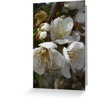 3 Plum Flower Blossoms Greeting Card