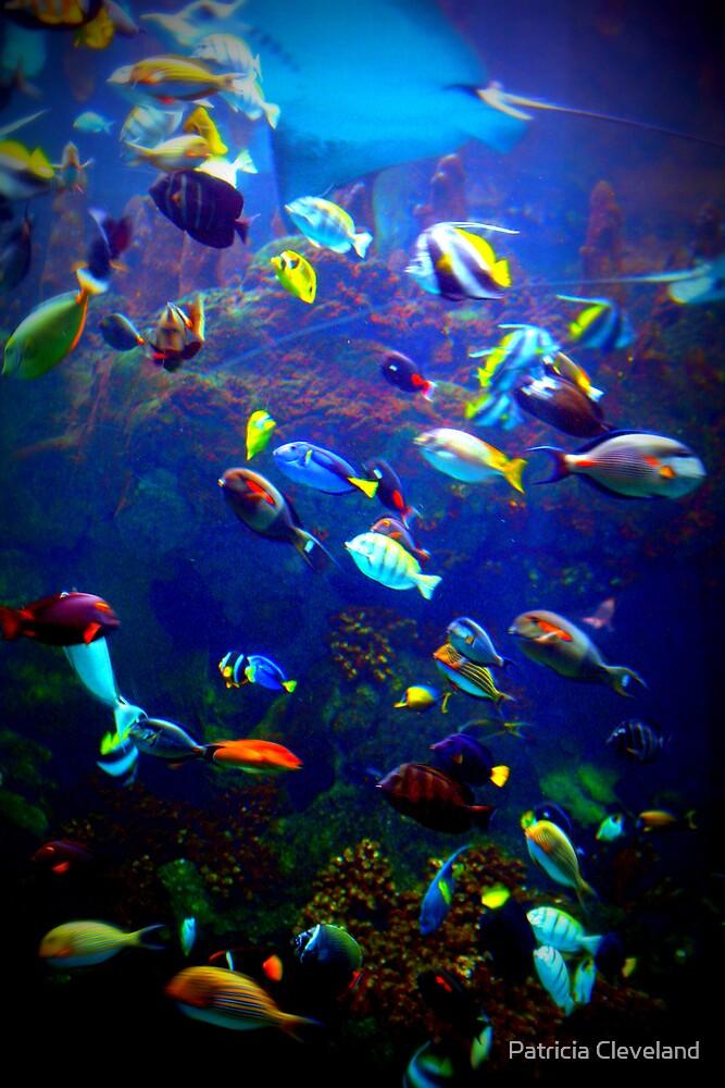 Colorful fish in ocean - photo#6