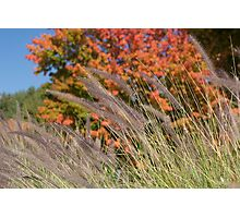 Cool Fall Breeze Photographic Print
