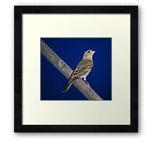 Momma Bird Framed Print