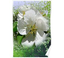 Apple Tree and Blossoms Poster