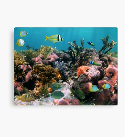 Tropical fish in coral reef Canvas Print