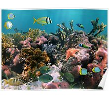Tropical fish in coral reef Poster