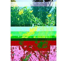 Flower Glith Photographic Print