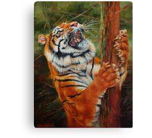 Tiger Chasing Prey Canvas Print