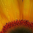 Sunshine and Rain by Barbara  Brown