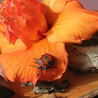 Orange Hibiscus Beetle on Flower. by Mywildscapepics